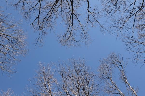 ハイジのフィールドだより「空も地もキラキラ」_b0174425_15450841.jpg