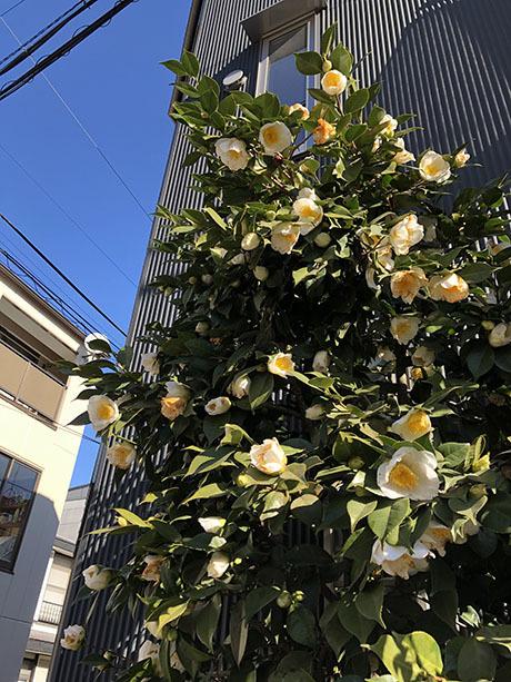 街の植物 60_f0149442_21554938.jpg