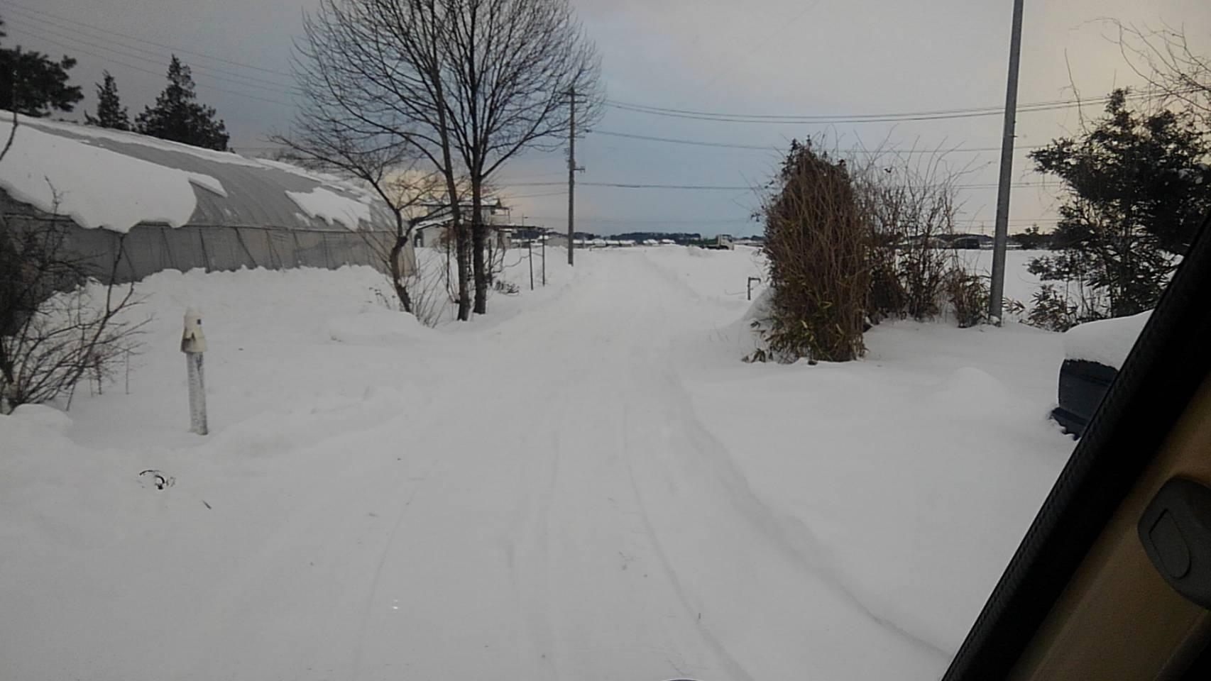 雪_c0154844_11341711.jpg