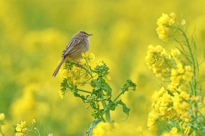 菜の花お花見♪ <雪加>_e0248688_17324511.jpg