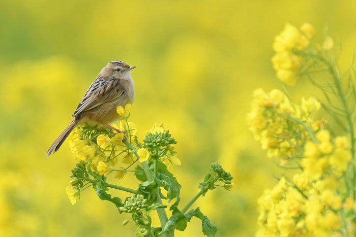 菜の花お花見♪ <雪加>_e0248688_17340507.jpg