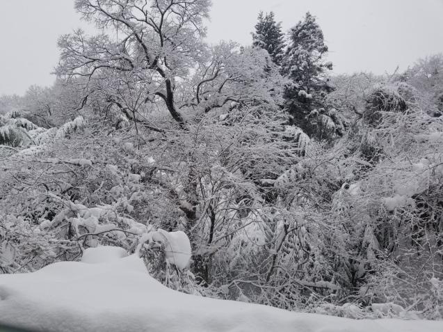 雪の中のお蕎麦屋さん。。。_e0143298_18584861.jpg
