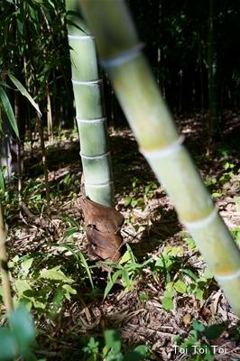 竹は_e0399307_20551586.jpg