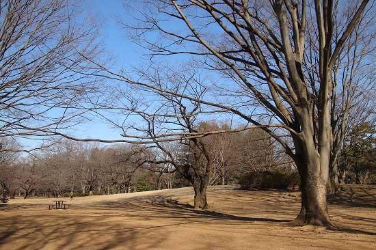 コサギとスノードロップ。今日の公園風景と朝日_e0255509_20502281.jpg