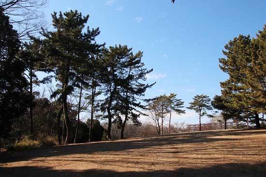 コサギとスノードロップ。今日の公園風景と朝日_e0255509_20505669.jpg