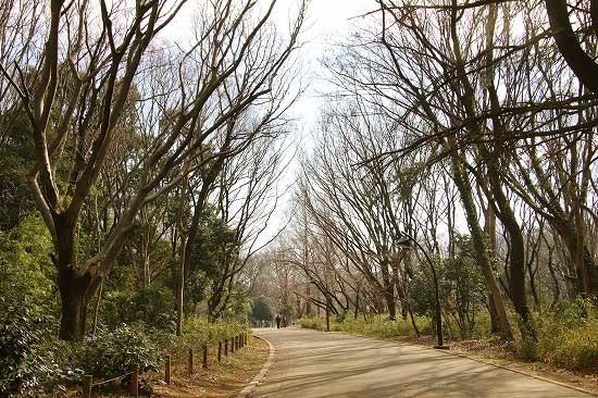 コサギとスノードロップ。今日の公園風景と朝日_e0255509_20511181.jpg
