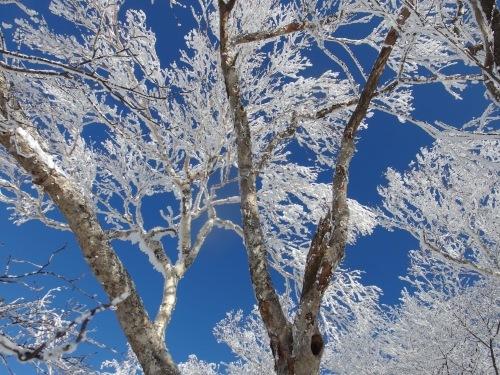 冬山登山_e0264942_10344626.jpeg