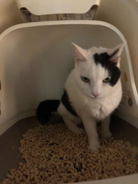 我が家の猫のトイレ_a0064067_15515052.jpeg
