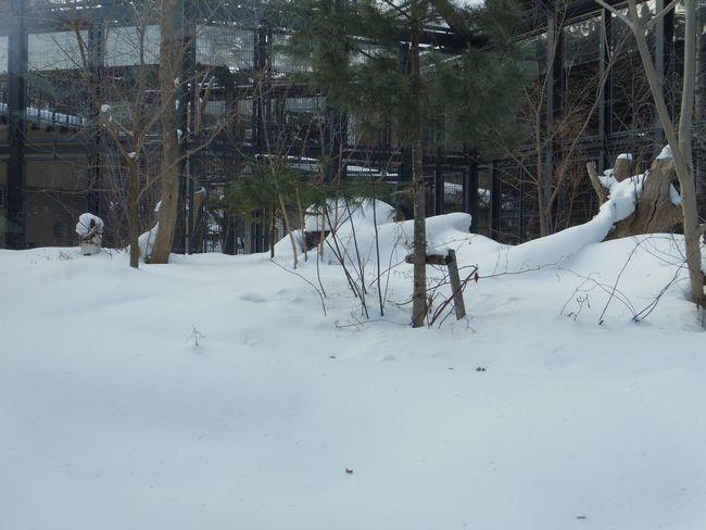 1月22日の円山動物園のアジアゾーン_b0014576_22585111.jpg