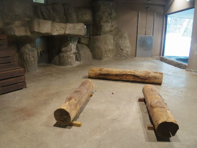 1月22日の円山動物園のアジアゾーン_b0014576_22590035.jpg