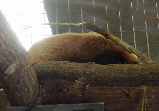 1月22日の円山動物園のアジアゾーン_b0014576_22590486.jpg