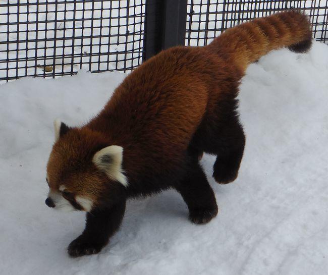 1月22日の円山動物園のアジアゾーン_b0014576_22590939.jpg