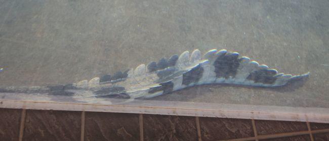 1月22日の円山動物園のは虫類・両生類館_b0014576_12375000.jpg