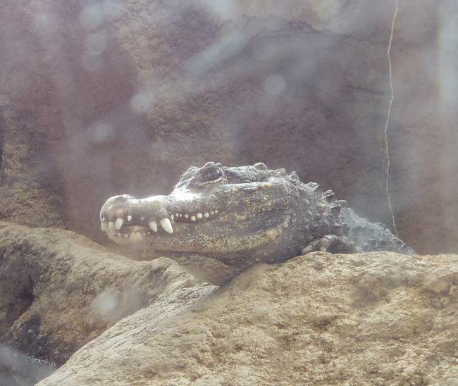 1月22日の円山動物園のは虫類・両生類館_b0014576_12401768.jpg