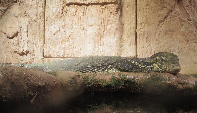1月22日の円山動物園のは虫類・両生類館_b0014576_12402271.jpg