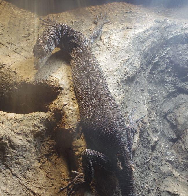1月22日の円山動物園のは虫類・両生類館_b0014576_12404160.jpg