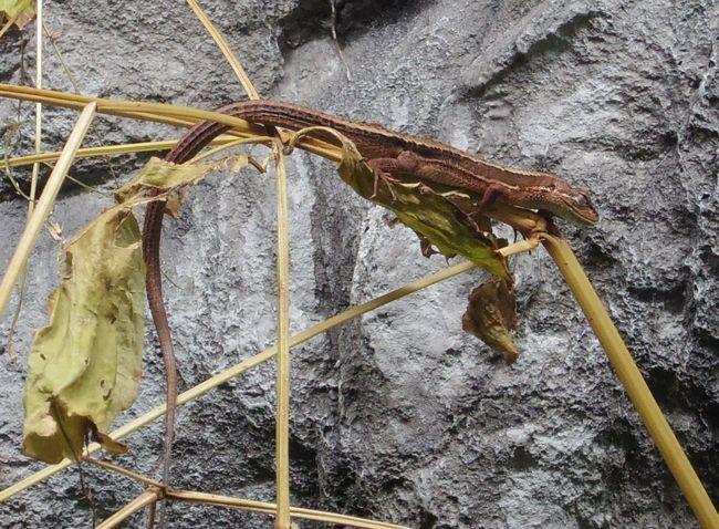 1月22日の円山動物園のは虫類・両生類館_b0014576_12414445.jpg
