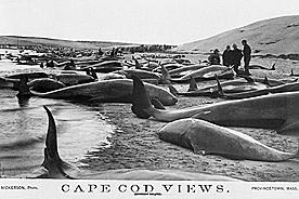 安部公房『死に急ぐ鯨たち』より_b0216318_04143745.jpg