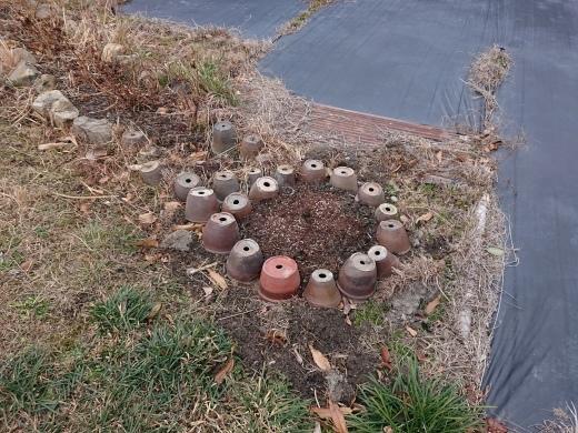 植木鉢の活用_c0348022_12095415.jpg