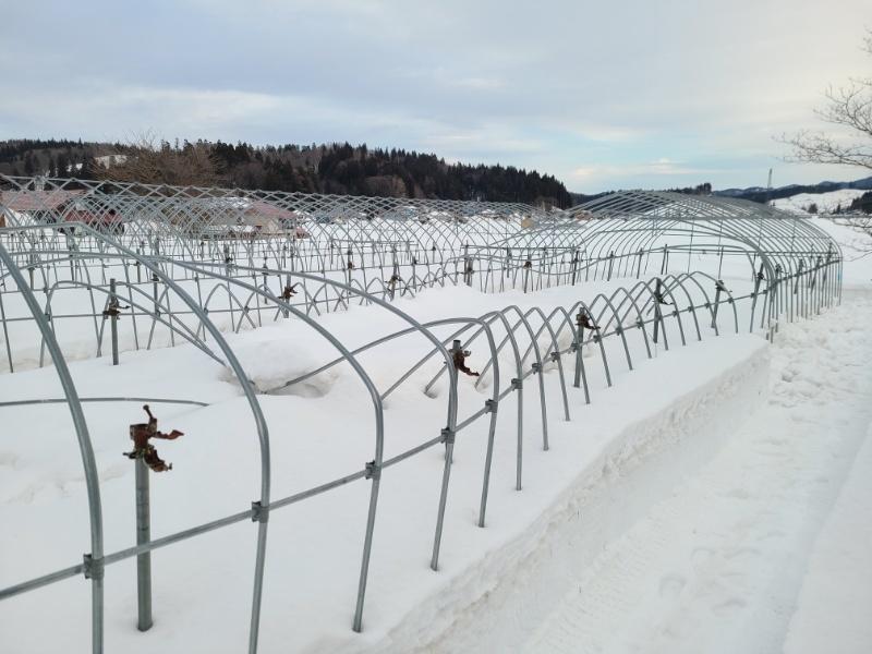 雪害の現場_f0081443_21415053.jpg