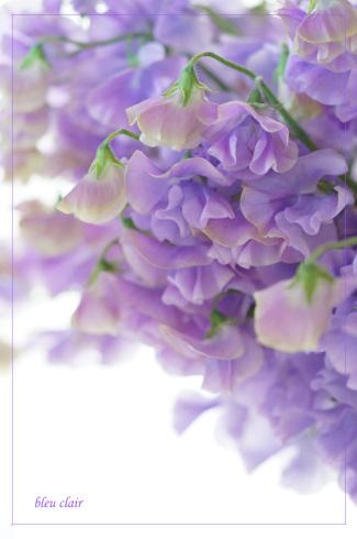 春の甘い香り_b0270372_15415568.jpg