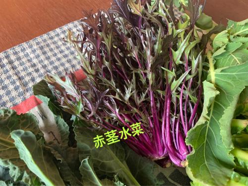 【おうちゴハン】冬の西洋・珍野菜♡_f0207881_14111232.jpg