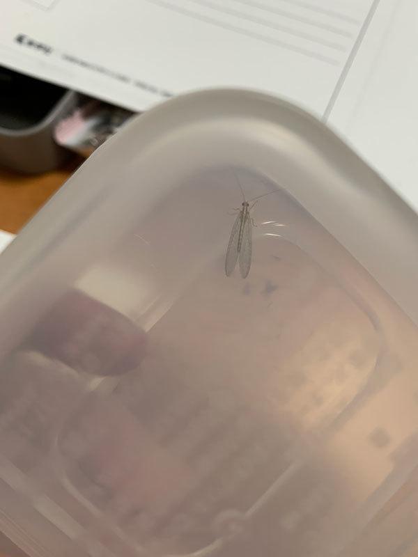 この昆虫は何でしょうか?_b0025008_21475075.jpg