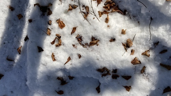 今シーズンいちの積雪だー!_b0174425_12042391.jpg