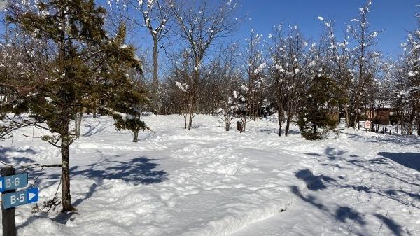 今シーズンいちの積雪だー!_b0174425_12441233.jpg