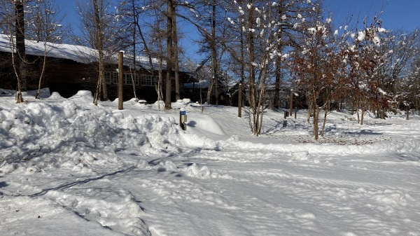 今シーズンいちの積雪だー!_b0174425_12443192.jpg