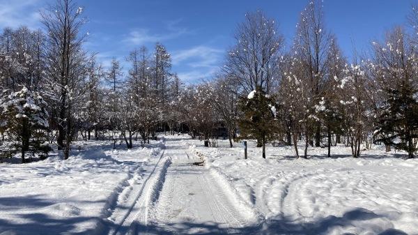 今シーズンいちの積雪だー!_b0174425_12465817.jpg