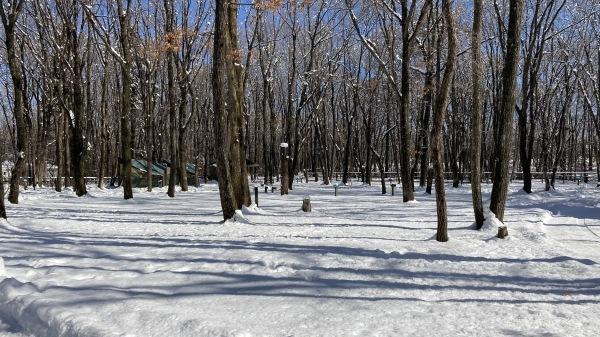 今シーズンいちの積雪だー!_b0174425_12472386.jpg