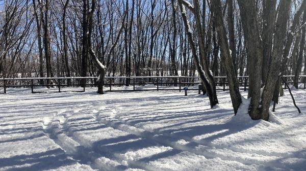 今シーズンいちの積雪だー!_b0174425_12472872.jpg