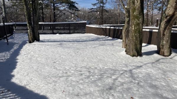 今シーズンいちの積雪だー!_b0174425_12490604.jpg