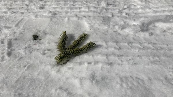 今シーズンいちの積雪だー!_b0174425_16264269.jpg