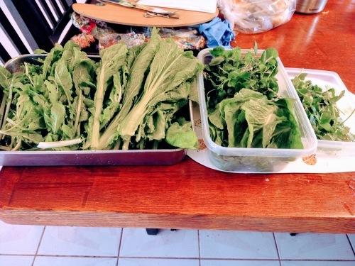 今日の収穫 1月22日 第一バルコニーから_a0173527_04125295.jpg