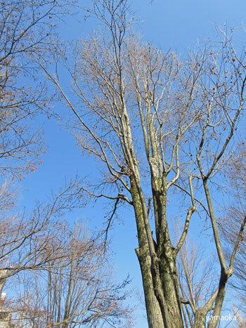 どんな樹木が好きですか。_f0071480_18121862.jpg