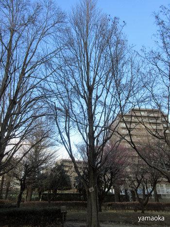 どんな樹木が好きですか。_f0071480_18133924.jpg