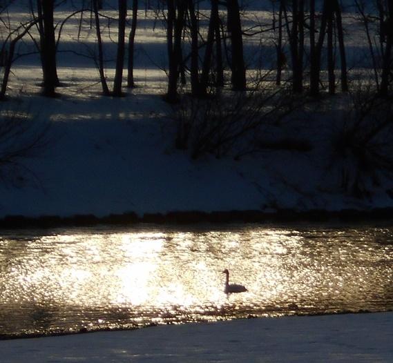 白鳥の川_c0198781_18173523.jpg
