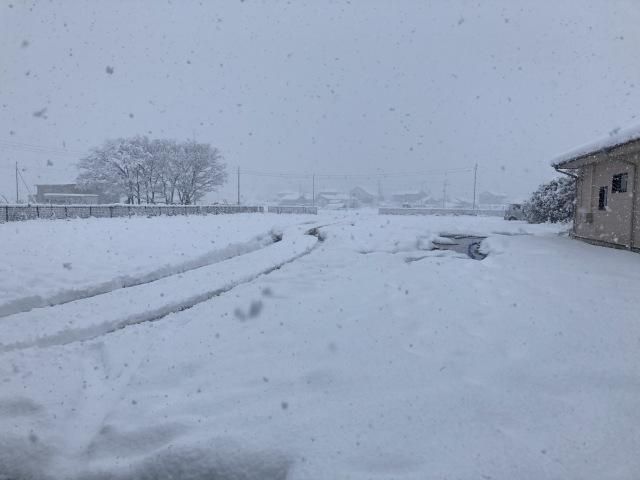 大雪を乗り切ろう_e0348093_16220392.jpg