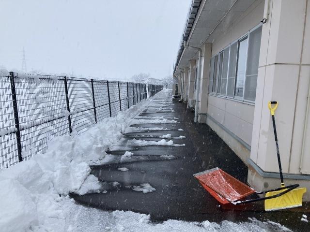 大雪を乗り切ろう_e0348093_16492445.jpg