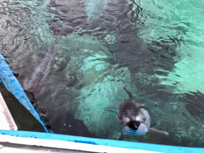 寂しがりのイルカ。──「のとじま水族館」(冬の北陸ドライブ旅行 その10)_d0352022_18275508.jpg