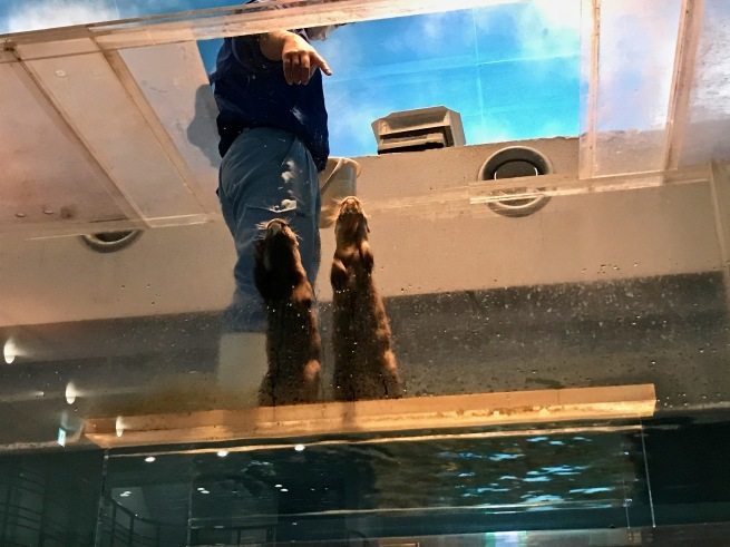 寂しがりのイルカ。──「のとじま水族館」(冬の北陸ドライブ旅行 その10)_d0352022_18281014.jpg
