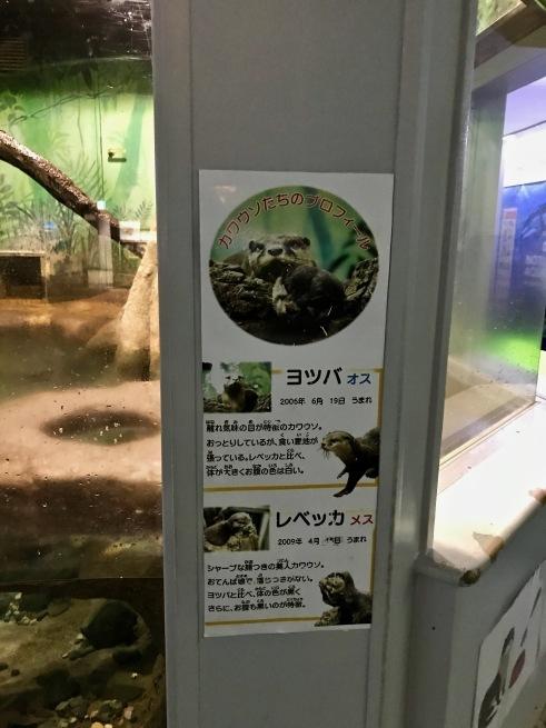 寂しがりのイルカ。──「のとじま水族館」(冬の北陸ドライブ旅行 その10)_d0352022_18281738.jpg