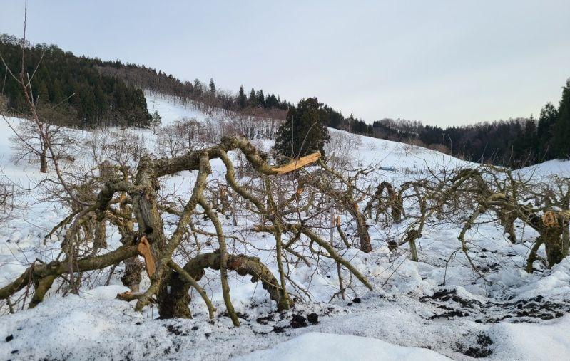 雪害の現場_f0081443_20031410.jpg