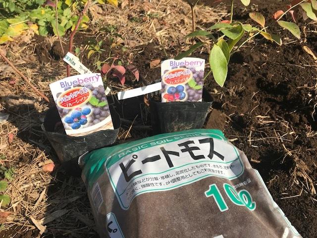 ブルーベリー追加植樹&イチゴに追肥1・25_c0014967_06501499.jpg
