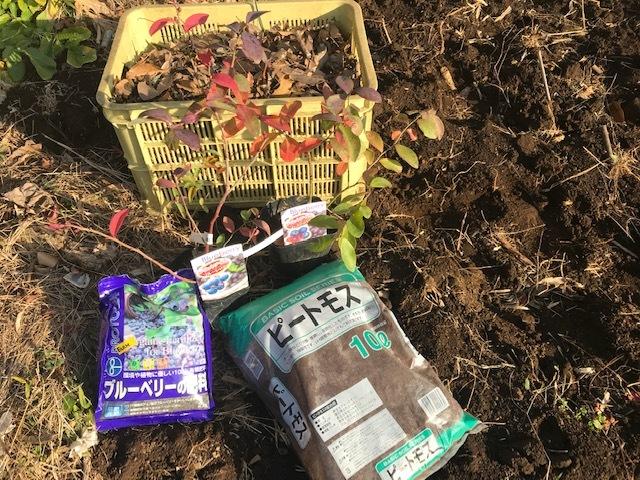 ブルーベリー追加植樹&イチゴに追肥1・25_c0014967_06512067.jpg