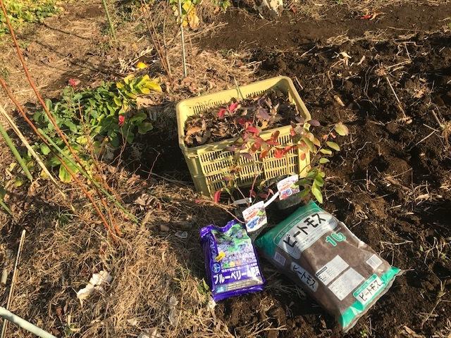 ブルーベリー追加植樹&イチゴに追肥1・25_c0014967_06513965.jpg