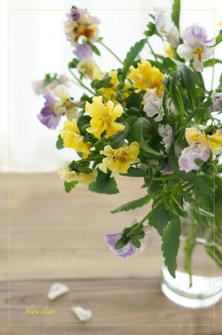 春色のパンジー_b0270372_18333669.jpg
