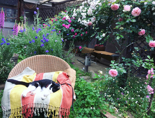 たいせつな真冬の庭仕事。_d0077603_14532084.jpg